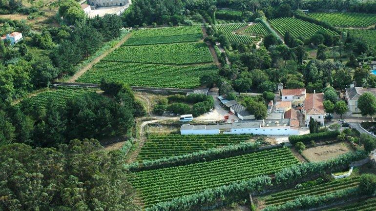domaine vinicole au bord de l'océan