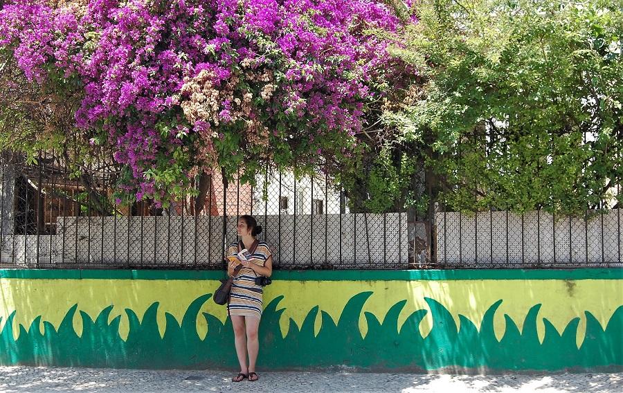 La profusion des fleurs de bougainvillier
