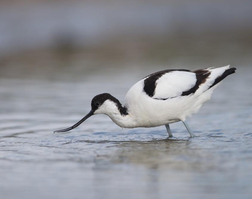 Estuaire du Tage riche en avifaune