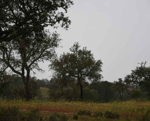 paysage d'Alentejo