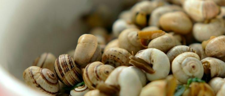 Em Portugal gosta se de caracóis